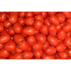 Tomate de Pera