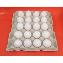 Cartón 20 Huevos Clase XL Blanco